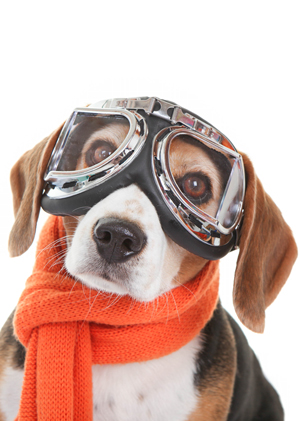 Dog with flying glasses