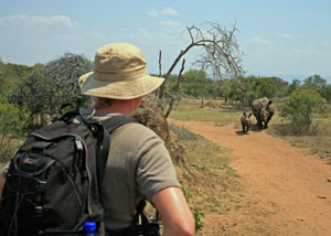 Man on African safari watching two Rhinos